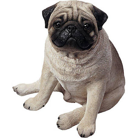 Sandicast Life Size Fawn Pug Dog Sculpture