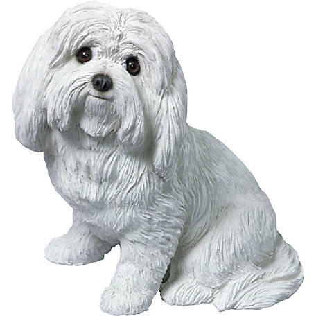 Sandicast Original Size Maltese Dog Sculpture