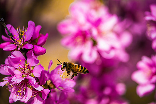 Raise Bees