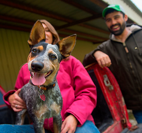 Pet Deworming And Vaccine Schedule For Dogs Pet Care Tractor