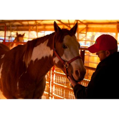 Horse Vaccination & Antibiotics - Tractor Supply Co.