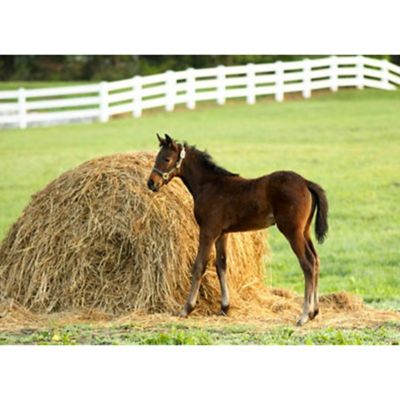 Feeding & Management of Young Horses - Tractor Supply Co.