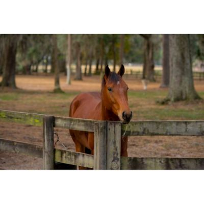 Does Your Horse Need a Winter Blanket? - Tractor Supply Co.