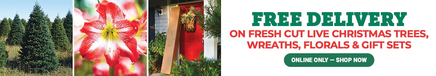 Live Christmas Trees and Wreaths - Tractor Supply Co.