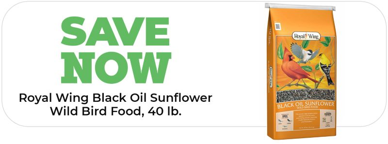 Royal Wing Black Oil Sunflower Wild Bird Food - Tractor Supply Co.