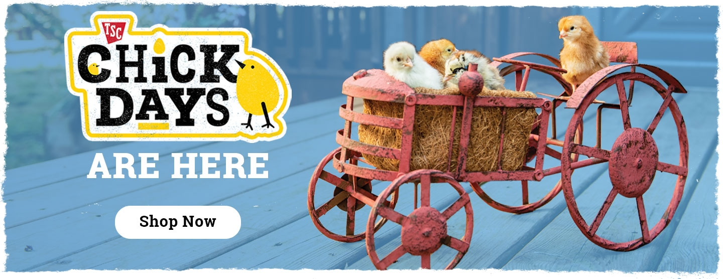 Chick Days - Tractor Supply Co.