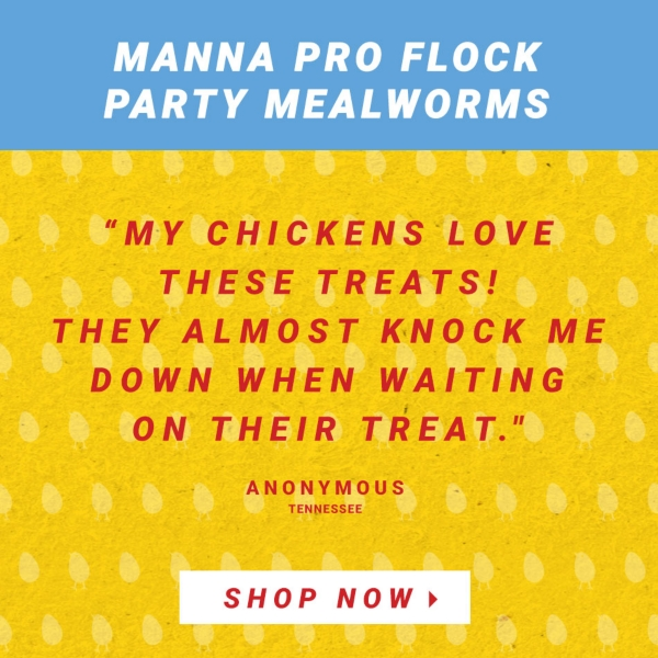 Manna Pro Flock Party Mealworms. My chicken love these treats! They almost knock me down when waiting on their treat. Anonymous, Tennessee. Shop All Poultry Treats.