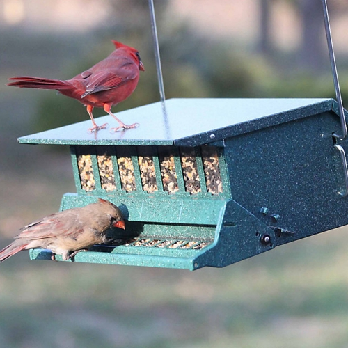 Feeders & Accessories