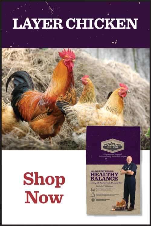 Layer Chicken - Tractor Supply Co.