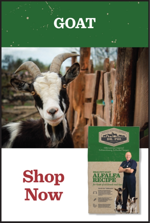 Goat - Tractor Supply Co.