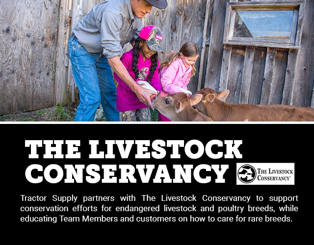 The Livestock Conservancy: Tractor Supply partners with The Livestock Conservancy to support conservation efforts for endangered livestock and poultry breeds, while educating Team Members and customers on how to care for rare breeds.