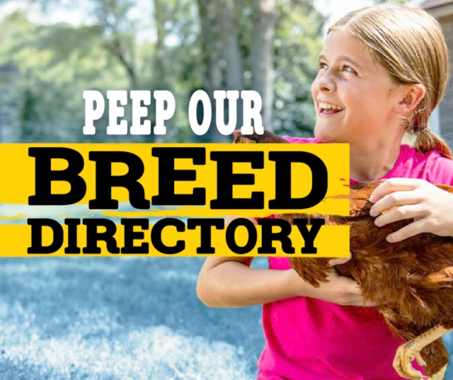 Peep our breed directory.