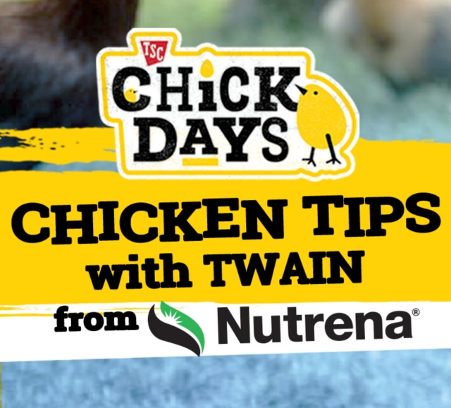TSC Chick Days. Chicken Tips with Twain from Nutrena.