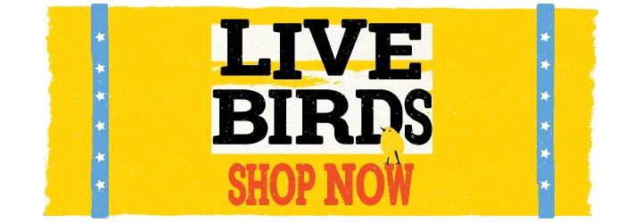 Live birds. Shop now.
