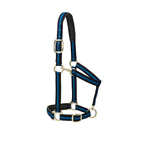 Weaver Leather Padded Adjustable Horse Halter, Average, Blue, T-35-7735-BL