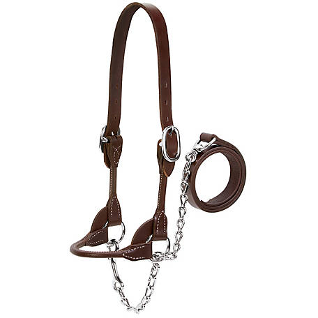Weaver Leather Livestock Dairy/Beef Rounded Show Halter, Brown, Large