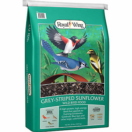 Royal Wing Gray Striped Sunflower, 20 lb.