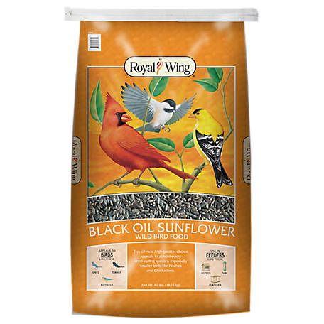 Royal Wing Black Oil Sunflower Wild Bird Food, 40 lb.